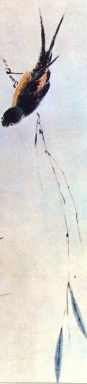 desenho-21-bonsai