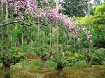 Gardens%20of%20Ryoan-ji