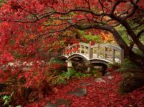 normal_Japanese Garden, Royal Roads University, British Columbia
