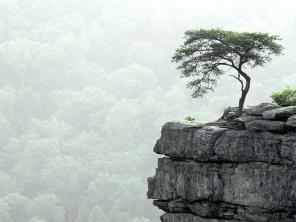 Árvore solitária na montanha