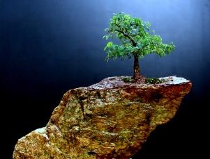 Pithecolobium tortum - Pedra (Granito)