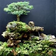 Penjing - Fonte modelada em concreto celular - Pithecolobium tortum