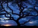 serengeti_national_park2c_tanzania