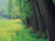 st-cnty001line_of_trees_26_meadow_-_france