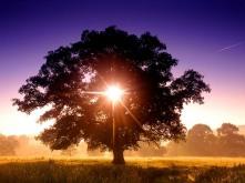 tree_of_life2c_north_devon2c_england