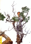 6A – Juniperus Chinesis altura 64cm – Comprimento133cm