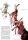 9A - Juniperus Chinesis 86cm