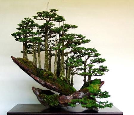 Paiasagen de Masahiko Kimura