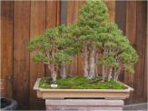 bonsai-101