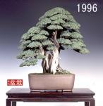 bonsai036