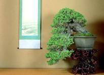 bonsai14g