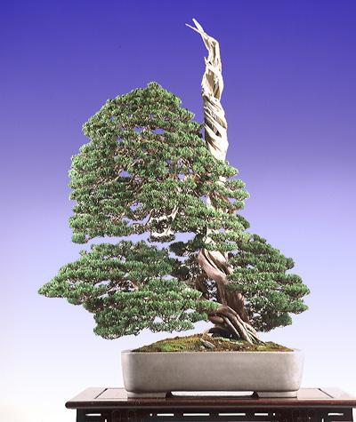 bonsai23-11