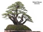 chamelaucium-floriferum-rsteven
