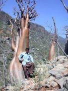 cool-tree1