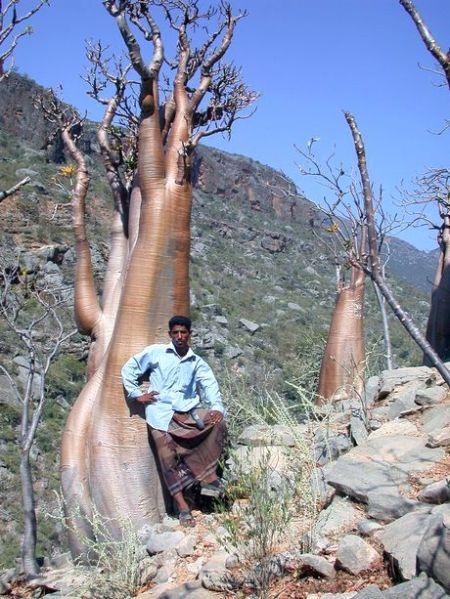 cool-tree2