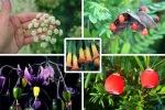 fatal-killer-poison-plants