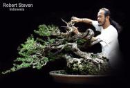 robert steven - Máteria de capa 1