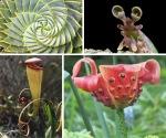 strange-plants1