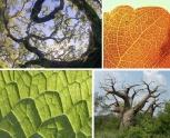 A beleza fractal da natureza.