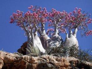 uncommon_trees_05