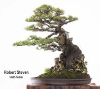 world_view_robert_steven-casuarina-equisetifolia