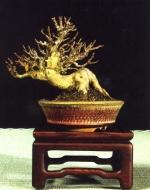 Acer buergeranum - Regina Susuki (Brasil)