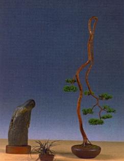 Klaus Kobe - Juniperus chinesis - Bunjin 108cm