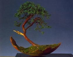 Ruud Lagas - Juniperus communis 70cm