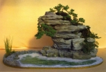 Willy Vande Ginste - Juniperus/Rododendron - Ishitsuki 75cm (fora da competição)
