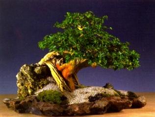 Ed de Grot - Cudrania sisir - Ishitsuki 50cm