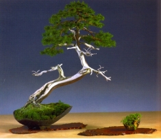 Marc Keteller - Junperus chinesis - Bunjin-gi 86cm