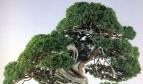 Ápice da árvore 2128 X 1264