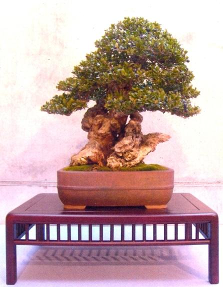 Xavier Massanet - Myrtus communis