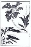 desenho-12-bonsai