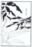 desenho-13-bonsai