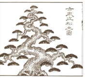 desenho-16-bonsai