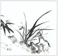 desenho-26-bonsai