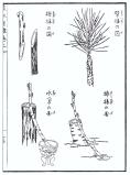 desenho-3-bonsai