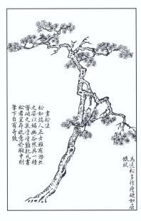 desenho-40-bonsai