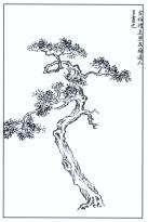 desenho-43-bonsai