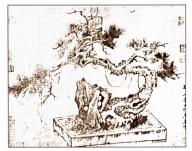 desenho-45-bonsai