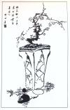 desenho-5-bonsai
