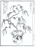 desenho-7-bonsai