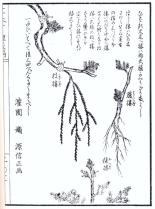 desenho-8-bonsai