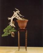 Juniperus rigida - Mateo Galdiero