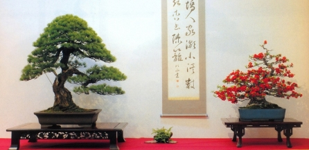 Pinus pentaphyla 92cm / Chaenomeles speciosa 75cm (premiados na 79˚Kokufu Ten)
