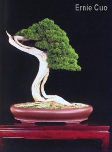 ernie-kuo02