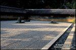 kyoto-garden-v-0733