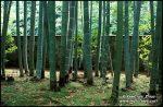 kyoto-garden-v-1383