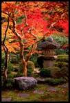 momiji-garden-enkoji-311
